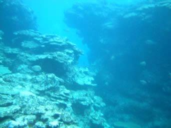 粟国島の筆ん崎南の海の中「リーフの裂け目が結構深かったです」