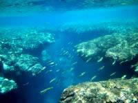 粟国島の筆ん崎西の海の中 - リーフの切れ目がおもしろい