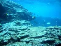 粟国島の筆ん崎西の海の中 - リーフエッジもとてもきれい