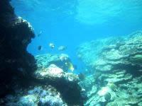粟国島の筆ん崎西の海の中 - 魚の種類も多かった