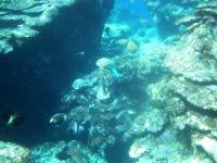 粟国島の筆ん崎西の海の中 - 地形も魚も最高