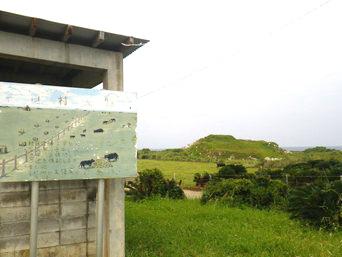 粟国島の村民牧場