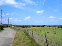 粟国島の村民牧場 - 塩工場へ向かう途中にあります