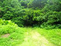 粟国島の西集落の洞窟 - うっそうとした緑の奥にあります