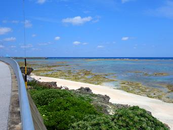 粟国島の照喜名原のモンパの木群落/ビーチ「シーサイドロード、あります」