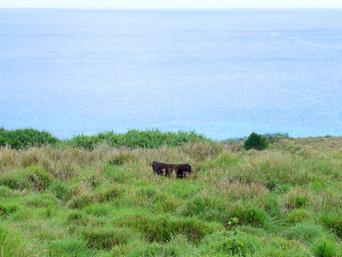 粟国島のナビィの牧場(ナビィの恋のロケ地)「今でも牧場として一部使っています」