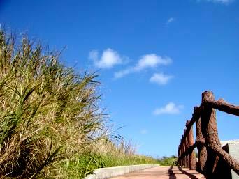 粟国島の南の海「海まで出るこの道が印象的でした 」