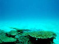 ニシ浜の海の中