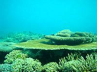 阿嘉ビーチの海の中