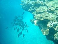 阿嘉島のヒズシビーチの海の中の写真
