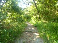 阿嘉島の中岳展望台 - うっそうとした森を結構歩きます