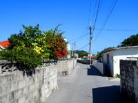 阿嘉島のニシ浜へ続く道 - 集落内の道はニシ浜まで続きます