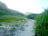 阿嘉島の砂白島へのルート - 最後に草むらを越えれば砂白島への道へ