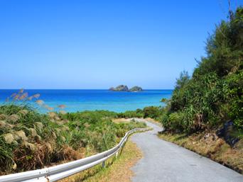 阿嘉島の阿嘉島横断道/ケラマジカ「集落からクシバルまでの山道」