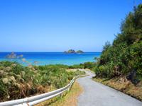 阿嘉島の阿嘉島横断道/ケラマジカ