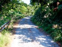 阿嘉島の阿嘉島横断道/ケラマジカ - 集落からしばらくは山の中