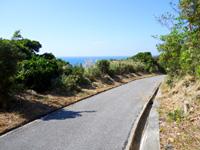 阿嘉島の阿嘉島横断道/ケラマジカ - クシバルまでは開けた道になります