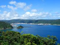 奄美大島の大熊展望広場/展望台 - シンボルツリーは今でも健在!