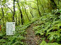 奄美大島の湯湾岳登山道 - すぐにこんな感じで暗い山道になります
