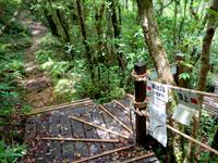 奄美大島の湯湾岳登山道 - なんと頂上近くにウッドデッキが!?