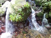 奄美大島のフナンギョの滝 - 滝壺らしき場所は結構高いです