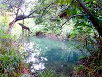 奄美大島の蒲生崎観光公園/蒲生神社/絆の池 - 絆の池と言われても・・・