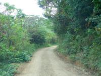 奄美大島の曽津高崎〜屋鈍横断道路の写真