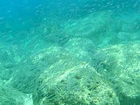 奄美大島の倉崎海岸の海の中 - 小魚の群れは多く見れました