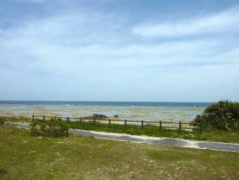 コーラルパームス前の海