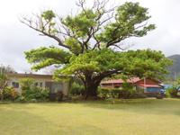 奄美大島の創作空間ムンユスィ/嘉徳小学校/カトク美術館 - どこが工房でどこが美術館か不明