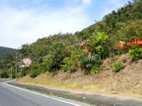 奄美大島のこっこ家/みなみくんの卵 - 入口は国道から裏に回った場所にある