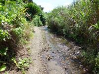 奄美大島の龍郷クジラ浜/安木屋くじら浜/鯨浜 - 砂浜はやや岩も多いがウミガメ産卵場所らしい