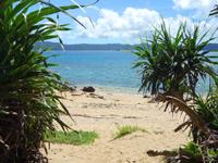 奄美大島の龍郷クジラ浜/安木屋くじら浜/鯨浜 - 海の透明度はこの湾の中でも抜群