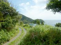 奄美大島の龍郷くじら浜展望場所/ソテツ群生地 - 車でかなり先まで行けます