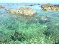 奄美大島のアオンのリーフの写真