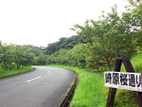 奄美大島の小湊展望所 - 小湊集落はかすかに望めます