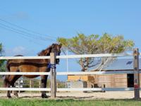 奄美大島のあやまる牧場 - おとなしいトカラ馬が出迎えてくれます