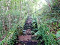 奄美大島のアランガチの滝上/滝上へのルート - 序盤の階段はもののけの森っぽい