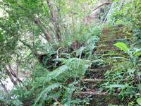 奄美大島のアランガチの滝上/滝上へのルート - 森の中だけど人が通れる程度に整備