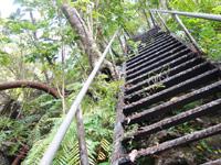 奄美大島のアランガチの滝上/滝上へのルート - 中盤は超急な階段