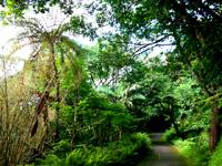 奄美大島のおがみ山公園/展望広場/行幸広場 - 市街地とは思えない熱帯雨林