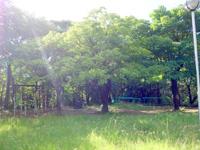 奄美大島のおがみ山公園/展望広場/行幸広場 - 公園は広いし高低差がかなりある
