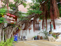 奄美大島の居酒屋・島料理 ガジュマルの樹の下で