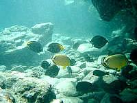 奄美大島の大浜海浜公園 海の中 - 魚の数は予想外に多かったです