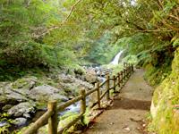 奄美大島のマテリヤの滝 - 滝までは遊歩道が整備されています
