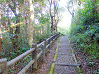 奄美大島の高知山展望台 - 展望台までは結構距離有り