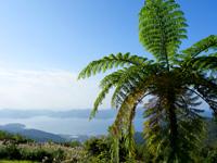 奄美大島の高知山展望台 - ここの見所は景色よりもパームツリー?