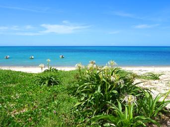 奄美大島の朝仁海岸