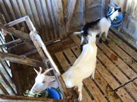 奄美大島の山羊島の写真