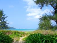 奄美大島の赤木名海岸 - 集落からビーチへ出るあぜ道